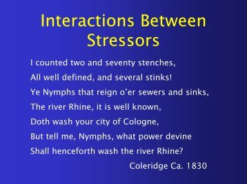 Interactions Between Stress Forms