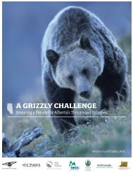 A GRIZZLY CHALLENGE - Canadian Parks and Wilderness Society