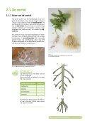 Bouw van de bloemplant - Page 4