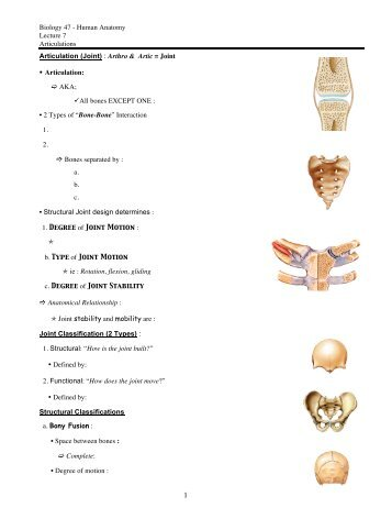 Biology 47 - Human Anatomy Lecture 8 Articulations Synovial Joint ...