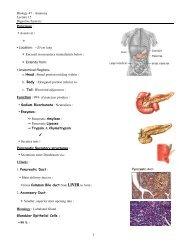 Biology 47 - Anatomy Lecture 15 Digestive System : Pancreas ...