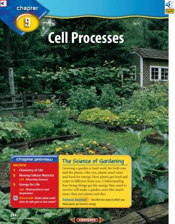 Chapter 9: Cell Processes
