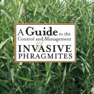 A Guide to the Control and Management of Invasive Phragmites [PDF]