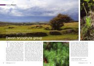 Devon bryophyte group