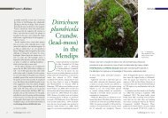 Ditrichum plumbicola Crundw. (lead-moss) in the Mendips