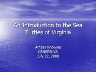An Introduction to the Sea Turtles of Virginia
