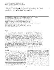 Functionally intact glutamate-mediated signaling ... - University of Utah