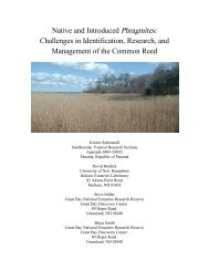 Native and Introduced Phragmites - National Estuarine Research ...