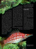 Stickstofftrilogie: Nitrit - Aquacare Gmbh & Co. KG - Seite 3