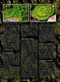 Ammoniak - ein starkes Fischgift - Aquacare Gmbh & Co. KG - Seite 5