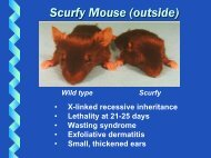 Scurfy Mouse (outside)