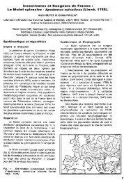Le Mulot sylvestre - Ecobio