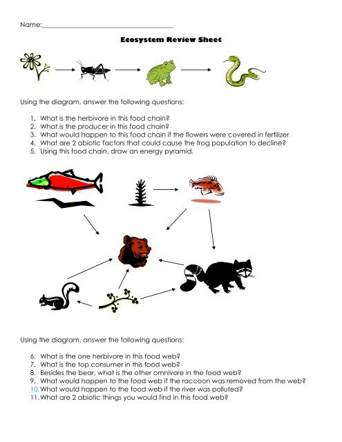 Ecosystem Review Sheet Using The Diagram  Answer The