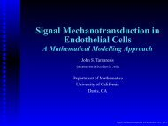 Signal Mechanotransduction in Endothelial Cells - University of ...