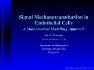 Signal Mechanotransduction in Endothelial Cells