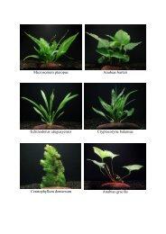 Bepflanzung ostafrikanischer Seecichliden-Becken