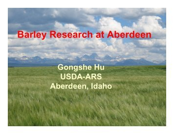 Barley Research at Aberdeen - American Malting Barley Association ...