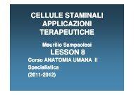 HematopoieticSC 25Oct2011 [modalità compatibilità].pdf - HUMAN ...