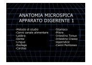 ANAT MICR DIGERENTE 1 .pdf