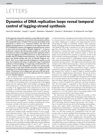 Dynamics of DNA replication loops reveal temporal control of ...