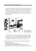 Hohe Spitzenleistung – moderater Dauerlauf? - Bundesverband ... - Page 5