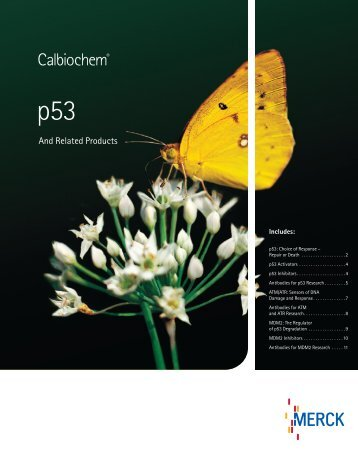 p53 and Related Products Brochure - BioNova