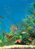 Aquarium problem solver - Tetra - Page 2