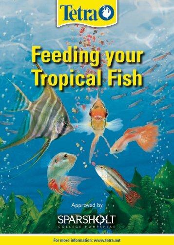 Feeding your Tropical Fish - Tetra