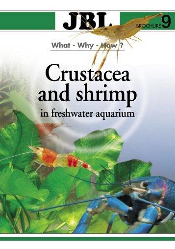 Crustacea and shrimp in freshwater aquarium(1.71MB)