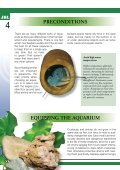 Crustacea and shrimp in freshwater aquarium(1.71MB) - Page 4