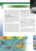 Crustacea and shrimp in freshwater aquarium(1.71MB) - Page 6