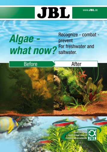 Algae- What now?(3.81MB)