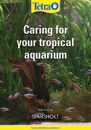 Caring for your tropical aquarium - Tetra