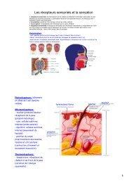 Les récepteurs sensoriels et la sensation