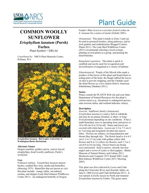 Common Wooly Sunflower Plant Guide - USDA Plants Database