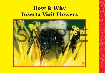 Download a PDF Sample of Insects Visit Flowers - Rainbow ...