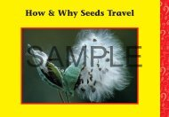 How & Why Seeds Travel - Rainbow Resource Center