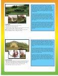 Basic Diorama Kit - Rainbow Resource Center - Page 4