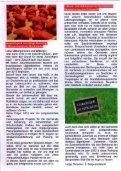 Die Brille - SPD Gochsheim - Seite 2