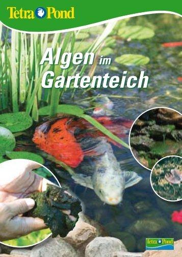 Algen im Gartenteich Algen im Gartenteich