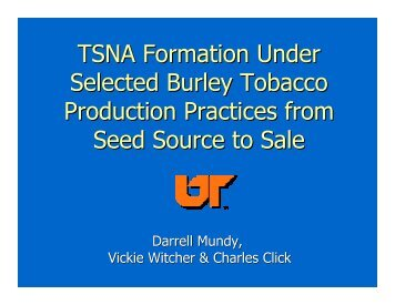 TSNA Formation Under Selected Burley Tobacco Production ...