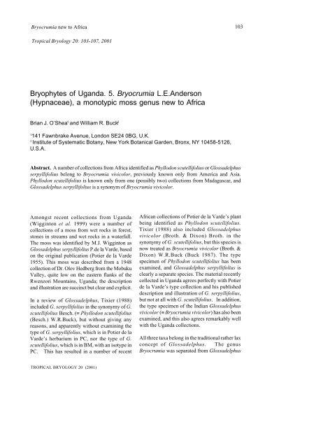 Hypnaceae - Tropical Bryology