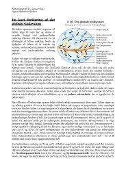En kort forklaring af det globale vindsystem - Horsens HF og VUC