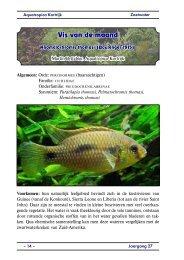 Onderfamilie: pseudocrenilabrinae - Vaders Sellewie