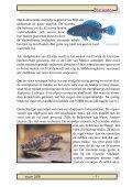 Maart 2008 - Vaders Sellewie - Page 7