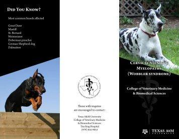 Wobbler syndrome - College of Veterinary Medicine - Texas A&M ...