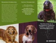 Download Brochure - College of Veterinary Medicine - Texas A&M ...