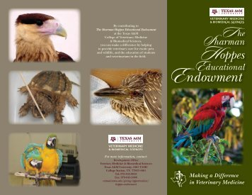 Download a brochure - College of Veterinary Medicine - Texas A&M ...