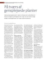 På tværs af gensplejsede planter - Viden (JP)