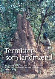 Nogle termitter driver en form for intensivt landbrug ved ... - Viden (JP)